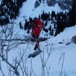 Альпинистское двоеборье - 2012